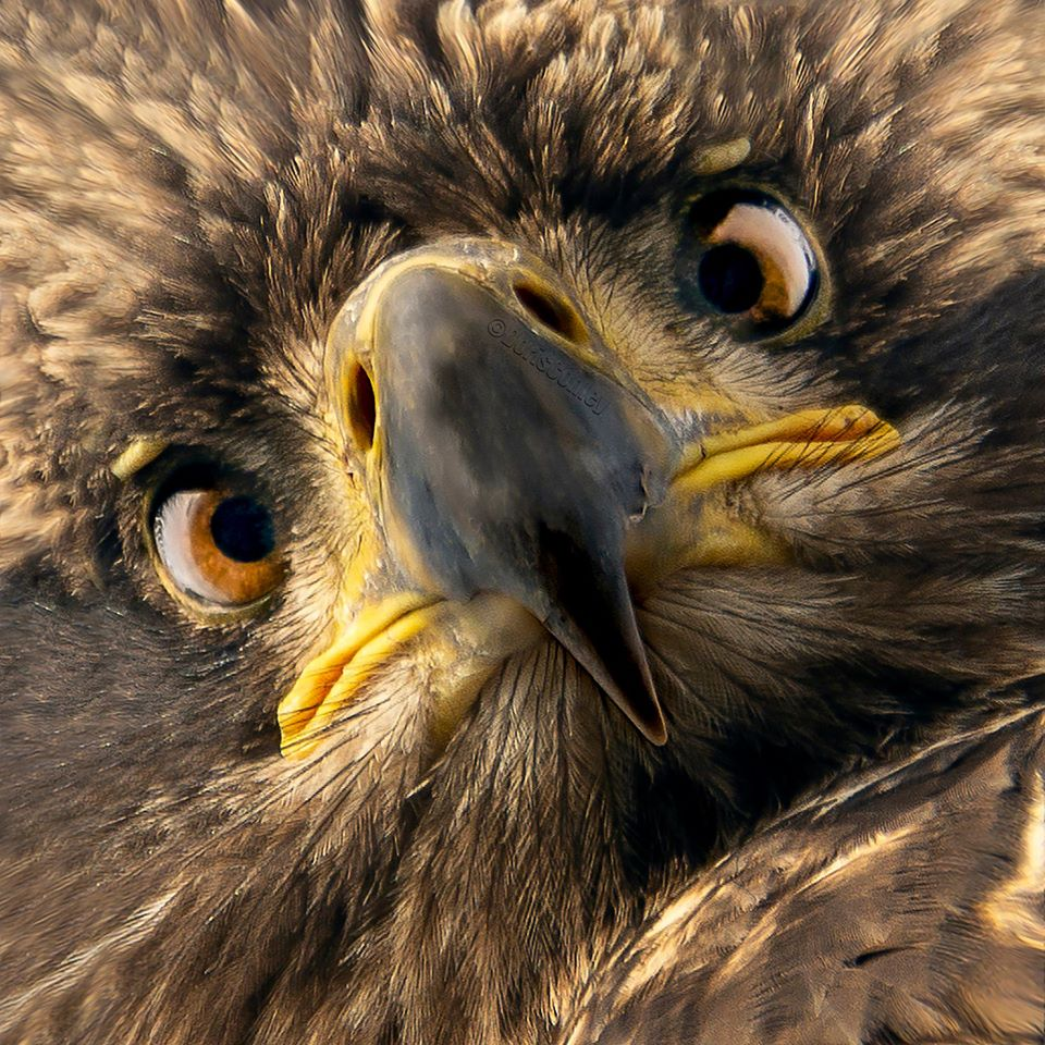 Amazing Facts About Bald Eagles - YouTube